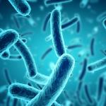 Prostatitis bacteriana crónica: ¿Qué es? Causas, síntomas y curas